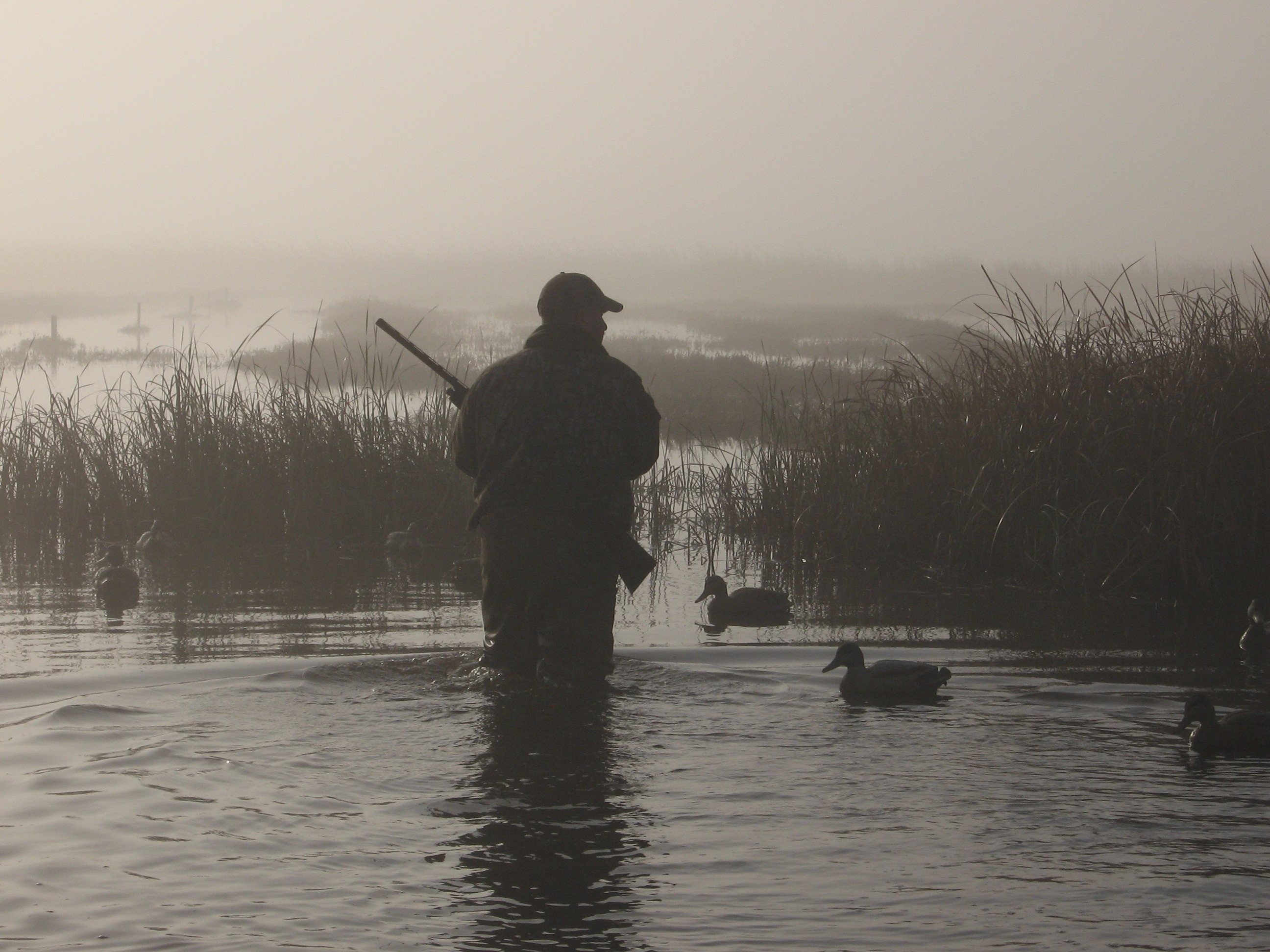 Photo courtesy of ducksunlimited.com