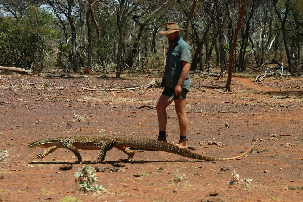 A Bungarra or Sand Goanna. If you hit one whilst driving a car it's not a problem. If you hit one whilst riding a motorbike then that's a problem.