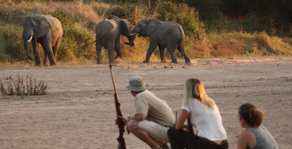Hunting in the Selous Game Reserve of Tanzania. The reserve is named after professional hunter Frederick Courtenay Selous. (Picture courtesy Selous Safari Company selous.com).