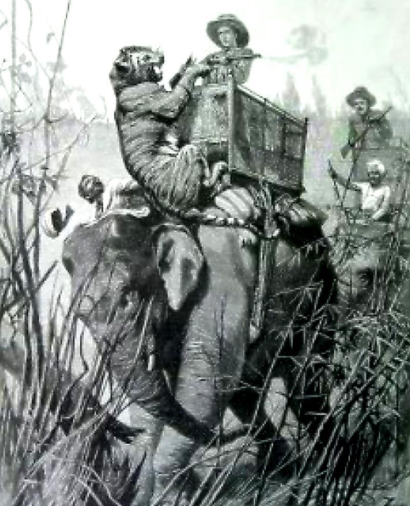 Howdah hunting India